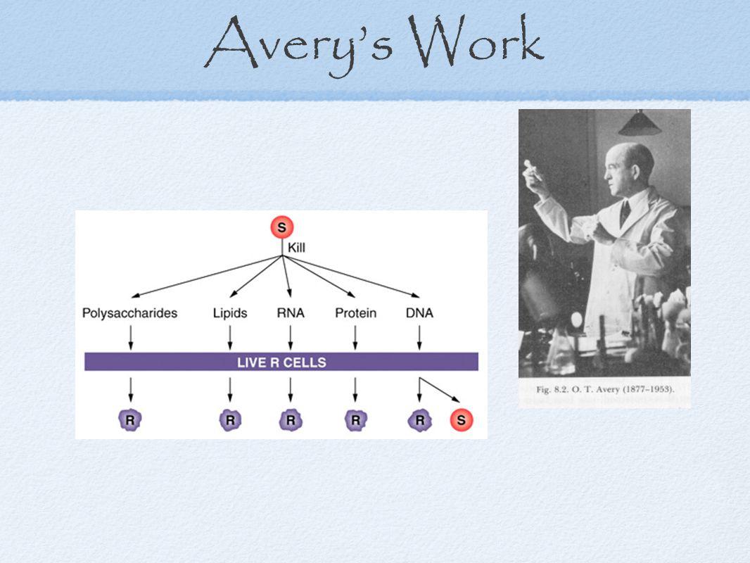 Avery's Work