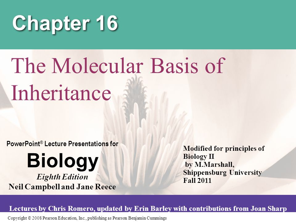 Copyright © 2008 Pearson Education, Inc., publishing as Pearson Benjamin Cummings PowerPoint ® Lecture Presentations for Biology Eighth Edition Neil Campbell and Jane Reece Lectures by Chris Romero, updated by Erin Barley with contributions from Joan Sharp Chapter 16 The Molecular Basis of Inheritance Modified for principles of Biology II by M.Marshall, Shippensburg University Fall 2011