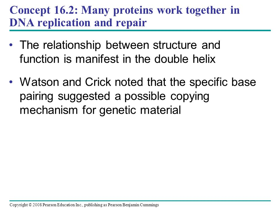 Concept 16.2: Many proteins work together in DNA replication and repair The relationship between structure and function is manifest in the double helix Watson and Crick noted that the specific base pairing suggested a possible copying mechanism for genetic material Copyright © 2008 Pearson Education Inc., publishing as Pearson Benjamin Cummings