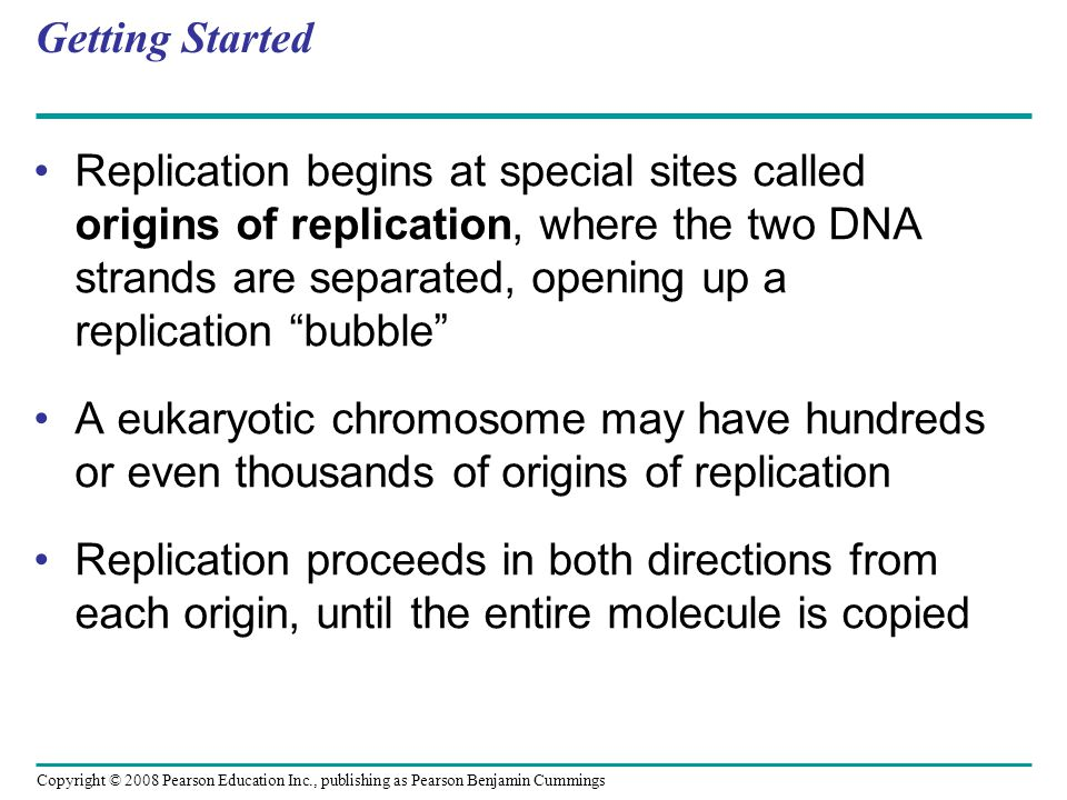 Getting Started Replication begins at special sites called origins of replication, where the two DNA strands are separated, opening up a replication ""
