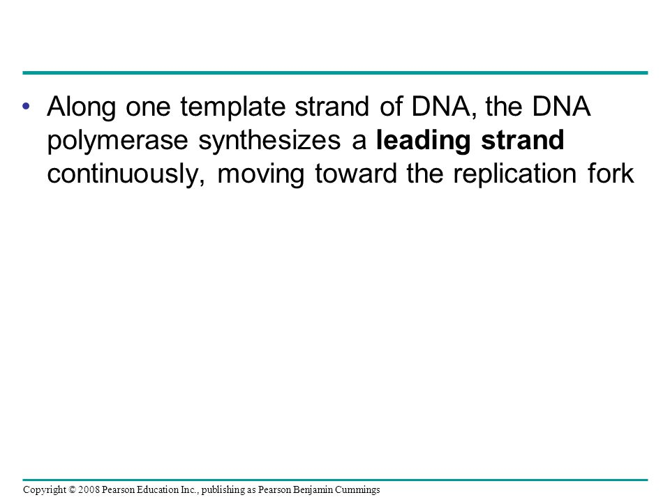 Along one template strand of DNA, the DNA polymerase synthesizes a leading strand continuously, moving toward the replication fork Copyright © 2008 Pe
