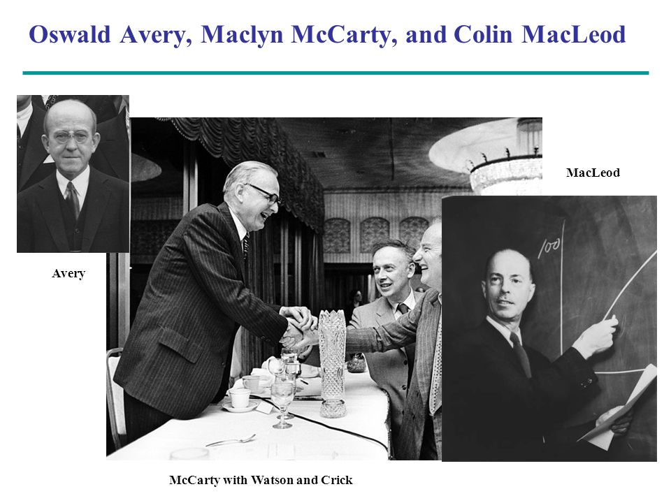 Oswald Avery, Maclyn McCarty, and Colin MacLeod Avery McCarty with Watson and Crick MacLeod