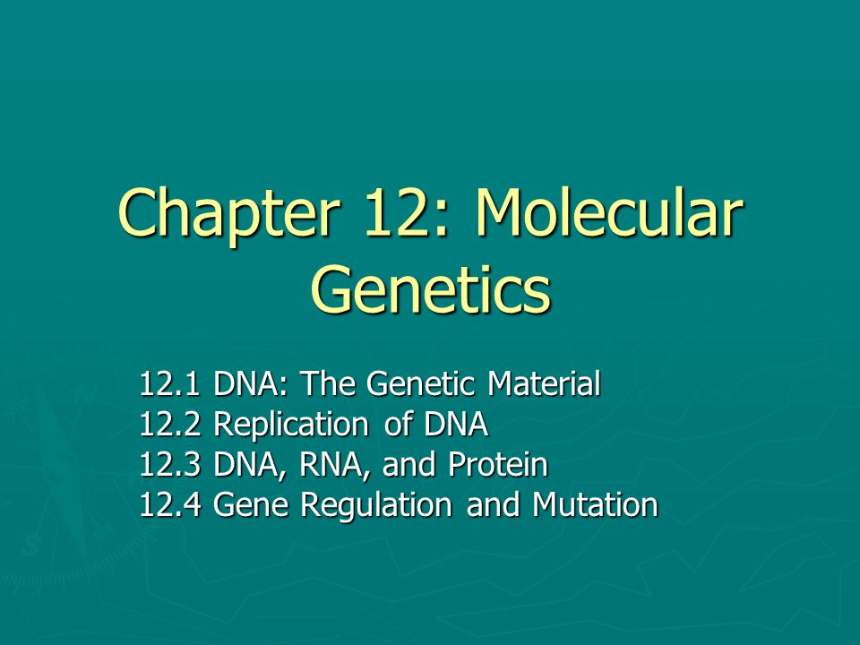Chapter 12: Molecular Genetics 12.1 DNA: The Genetic Material 12.2 Replication of DNA 12.3 DNA, RNA, and Protein 12.4 Gene Regulation and Mutation