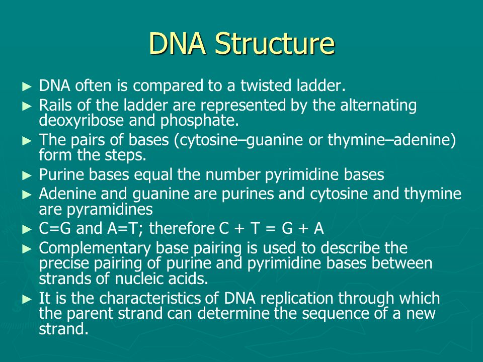 DNA Structure ► ► DNA often is compared to a twisted ladder. ► ► Rails of the ladder are represented by the alternating deoxyribose and phosphate. ► ►