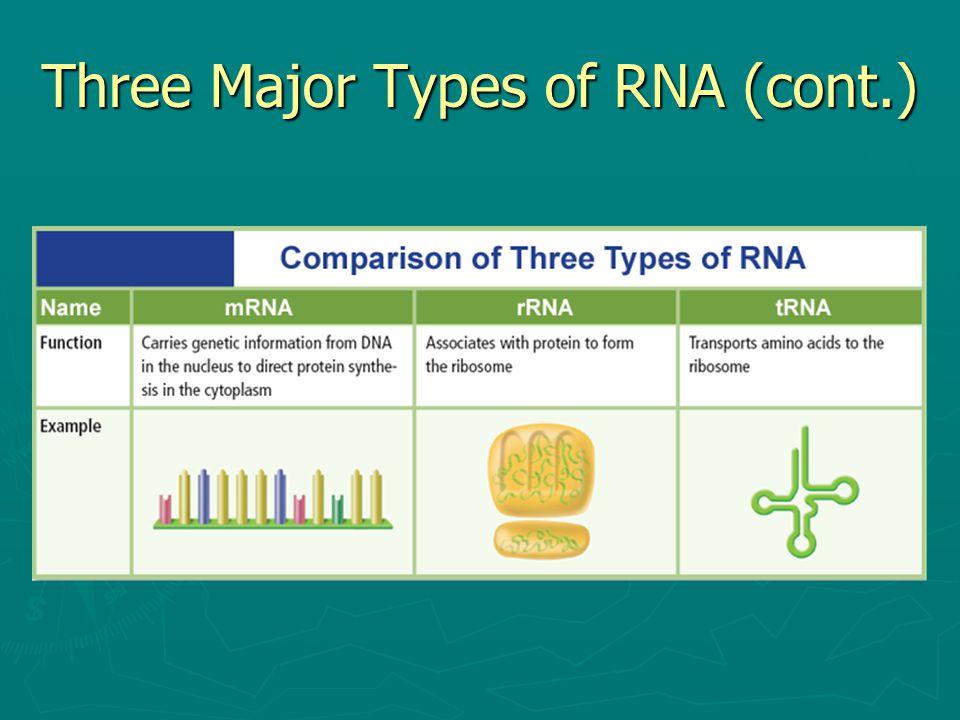 Three Major Types of RNA (cont.)