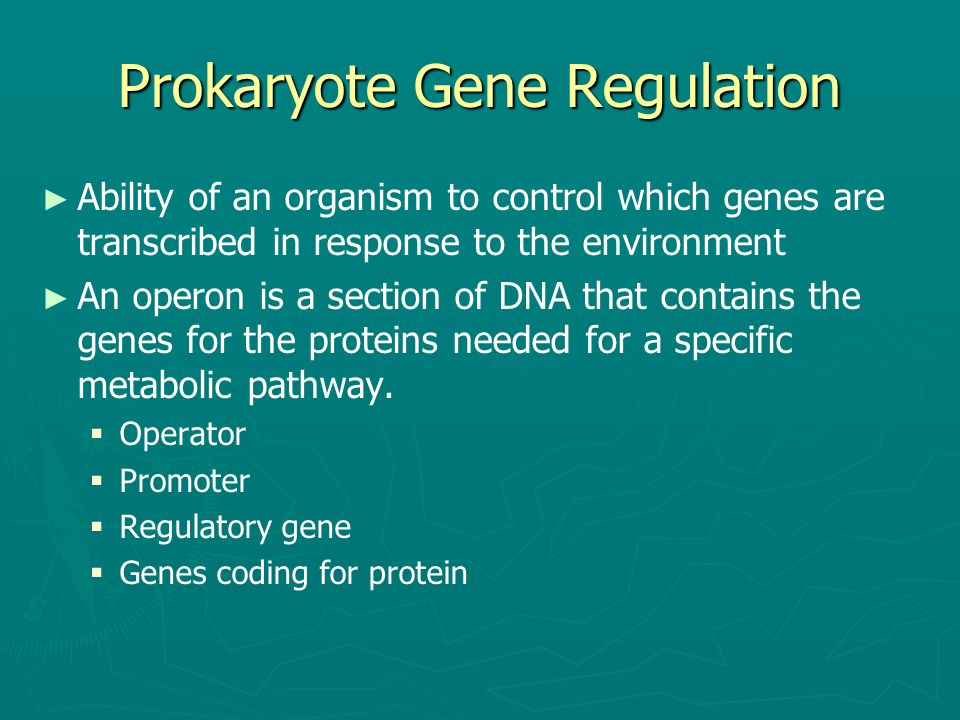 Prokaryote Gene Regulation ► ► Ability of an organism to control which genes are transcribed in response to the environment ► ► An operon is a section