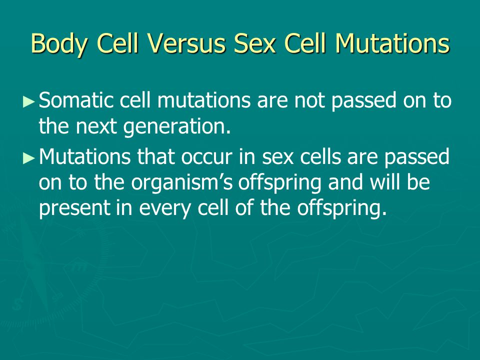 Body Cell Versus Sex Cell Mutations ► ► Somatic cell mutations are not passed on to the next generation. ► ► Mutations that occur in sex cells are pas