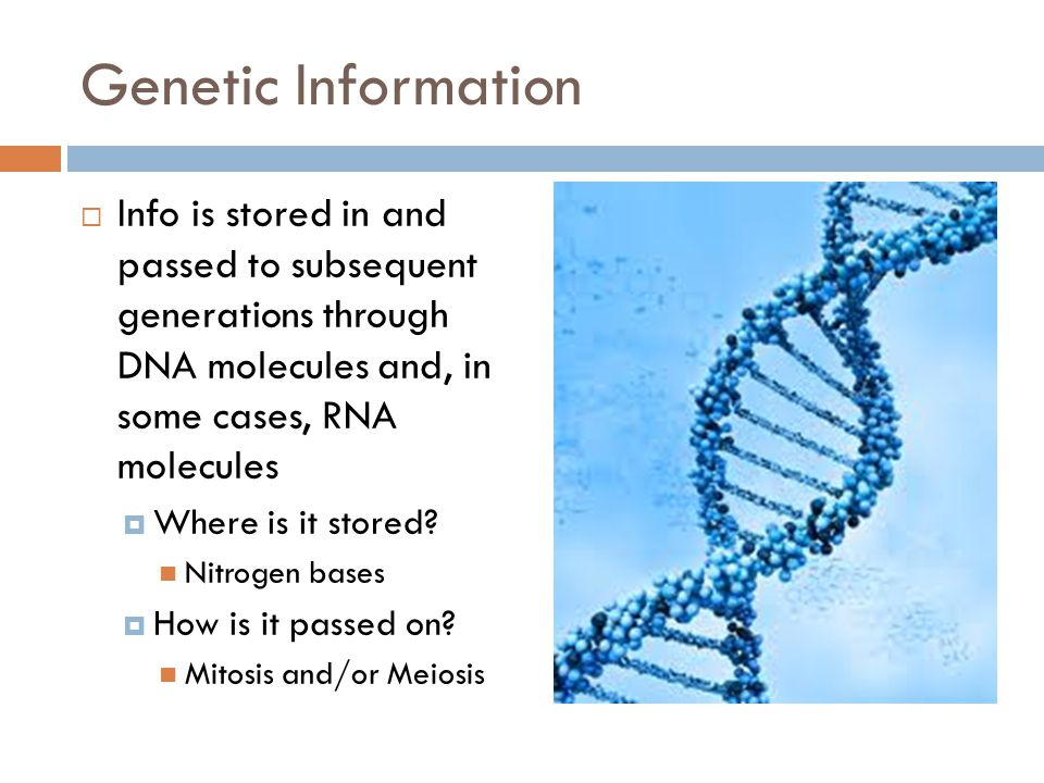 Genetic Information  Info is stored in and passed to subsequent generations through DNA molecules and, in some cases, RNA molecules  Where is it sto