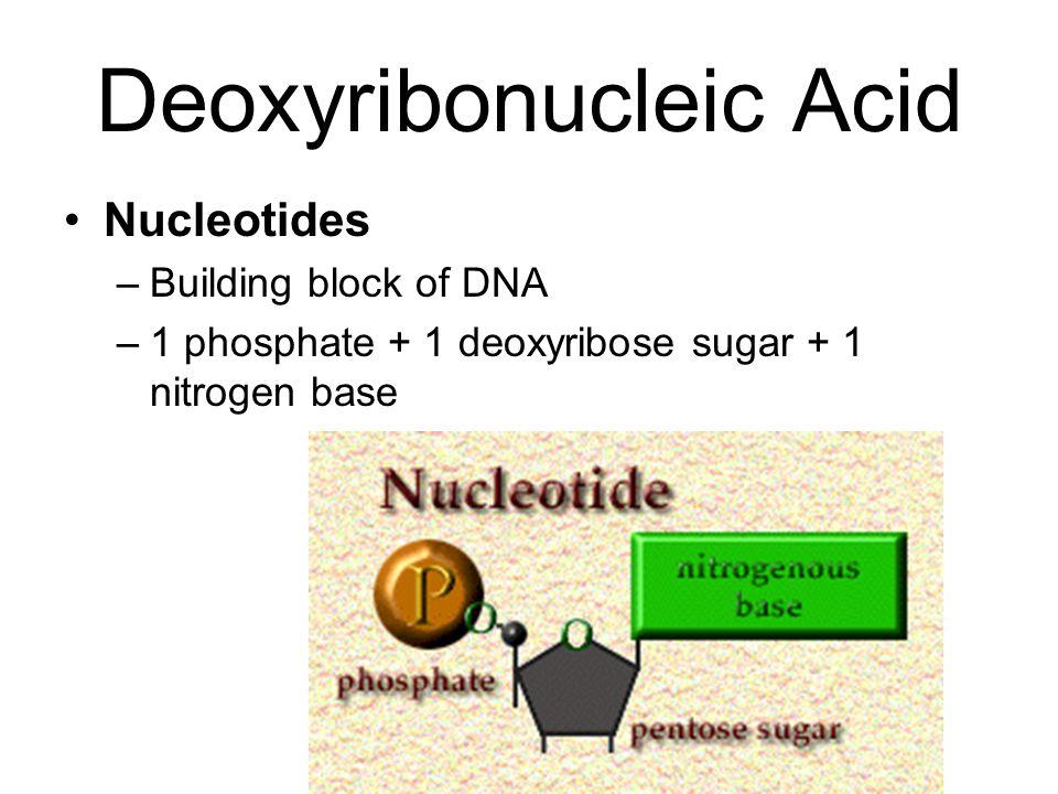 Deoxyribonucleic Acid Nucleotides –Building block of DNA –1 phosphate + 1 deoxyribose sugar + 1 nitrogen base