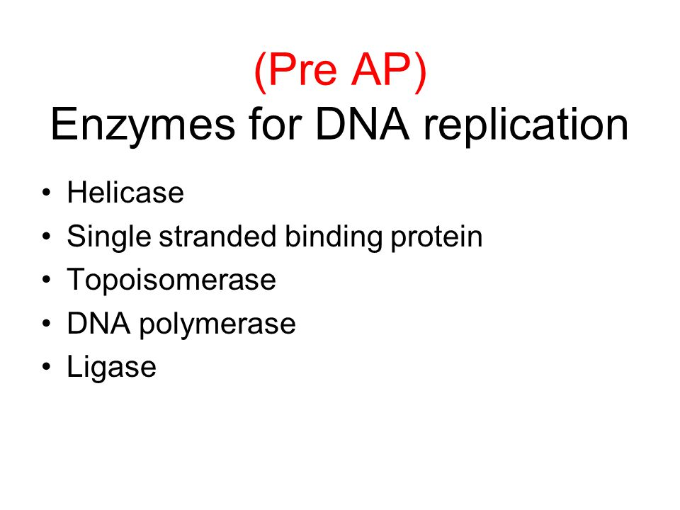 (Pre AP) Enzymes for DNA replication Helicase Single stranded binding protein Topoisomerase DNA polymerase Ligase