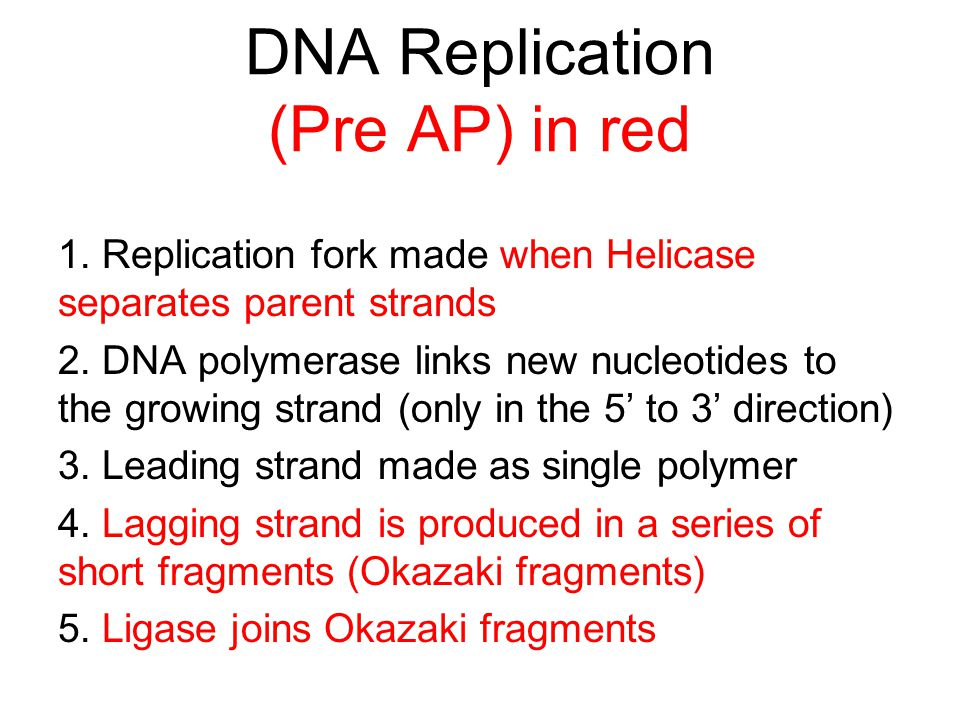 DNA Replication (Pre AP) in red 1. Replication fork made when Helicase separates parent strands 2. DNA polymerase links new nucleotides to the growing
