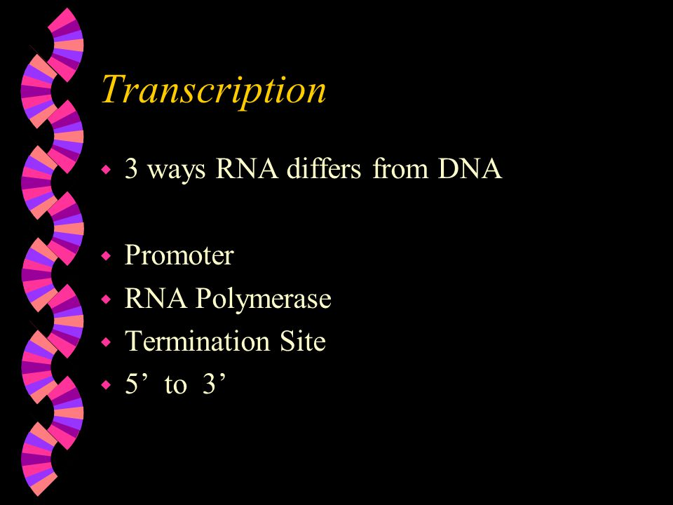Transcription w 3 ways RNA differs from DNA w Promoter w RNA Polymerase w Termination Site w 5' to 3'