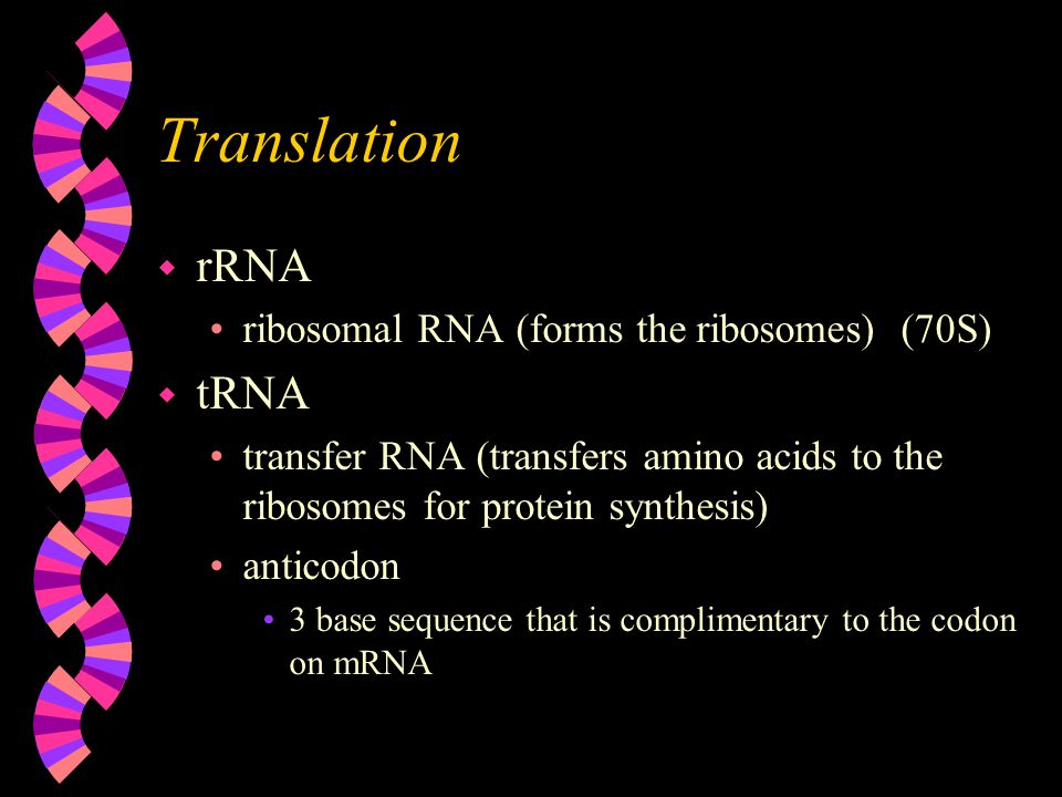Translation w rRNA ribosomal RNA (forms the ribosomes) (70S) w tRNA transfer RNA (transfers amino acids to the ribosomes for protein synthesis) anticodon 3 base sequence that is complimentary to the codon on mRNA
