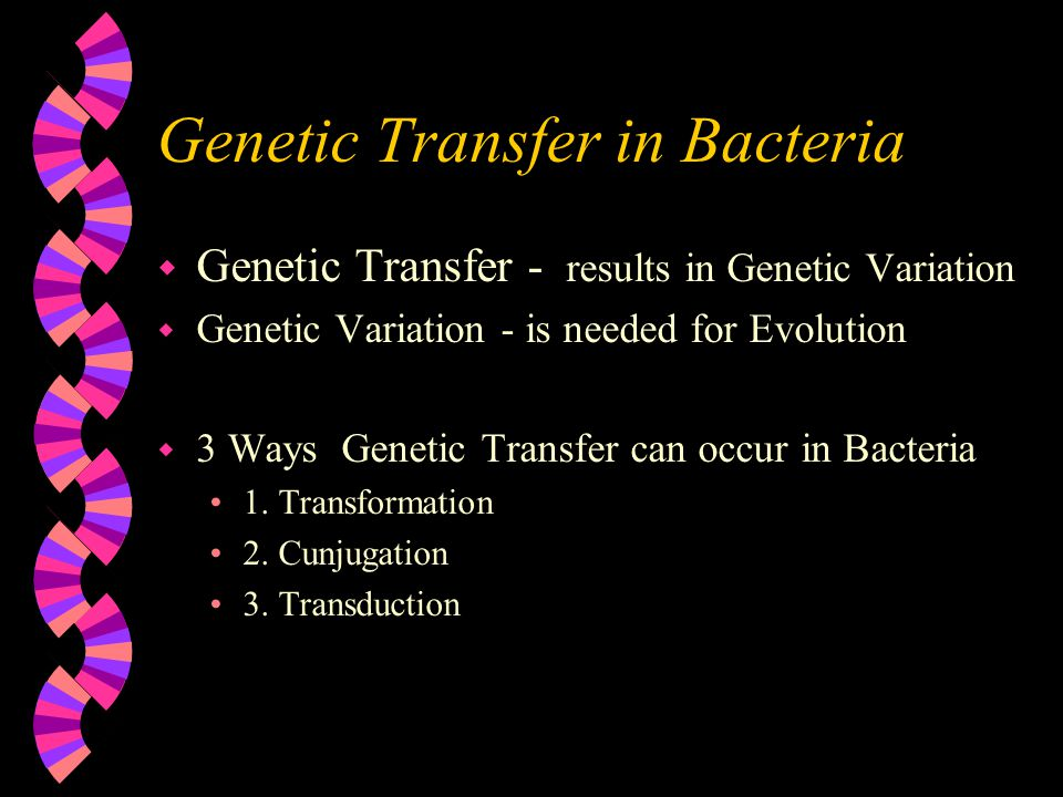 Genetic Transfer in Bacteria w Genetic Transfer - results in Genetic Variation w Genetic Variation - is needed for Evolution w 3 Ways Genetic Transfer can occur in Bacteria 1.