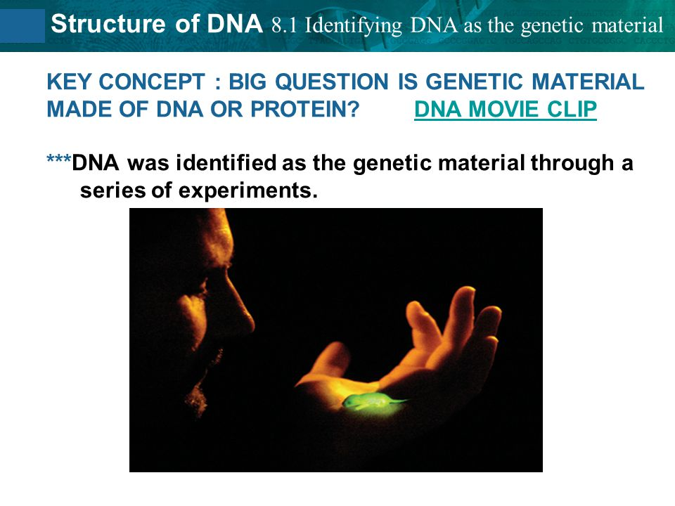 8.2 Structure of DNA Griffith finds a 'transforming principle.' Griffith experimented with the bacteria that cause pneumonia.