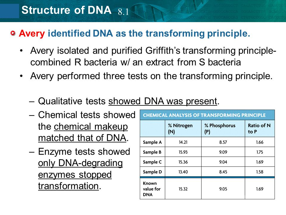 8.2 Structure of DNA Avery identified DNA as the transforming principle. Avery isolated and purified Griffith's transforming principle- combined R bac