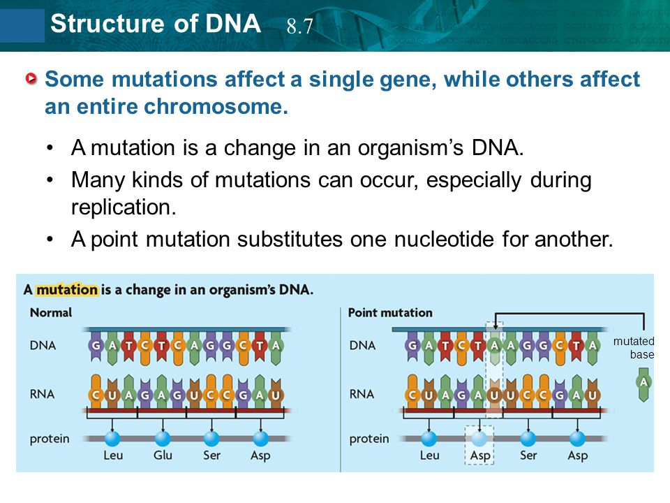 8.2 Structure of DNA Some mutations affect a single gene, while others affect an entire chromosome. A mutation is a change in an organism's DNA. Many
