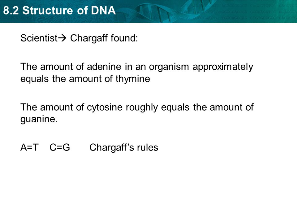 8.2 Structure of DNA KEY CONCEPT Transcription converts a gene into a single-stranded RNA molecule.