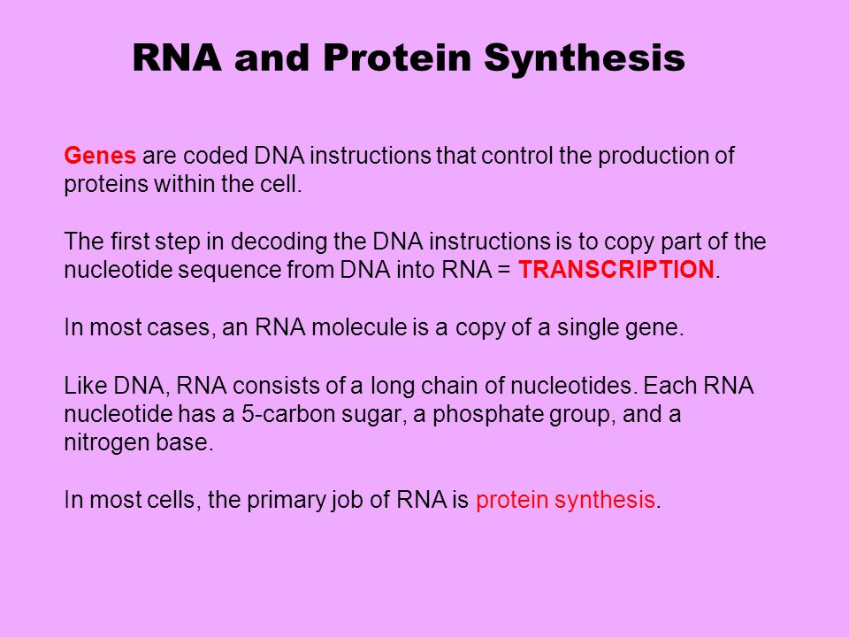 RNA and Protein Synthesis Genes are coded DNA instructions that control the production of proteins within the cell. The first step in decoding the DNA