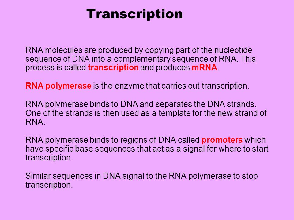 Transcription RNA molecules are produced by copying part of the nucleotide sequence of DNA into a complementary sequence of RNA.