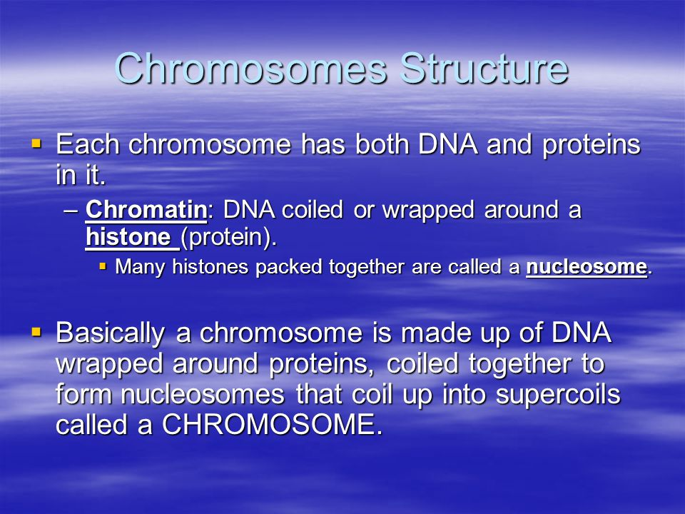 Chromosomes Structure  Each chromosome has both DNA and proteins in it.