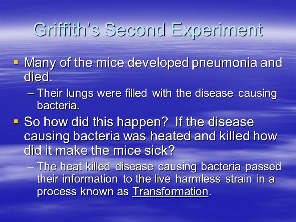 Griffith's Second Experiment  Many of the mice developed pneumonia and died.