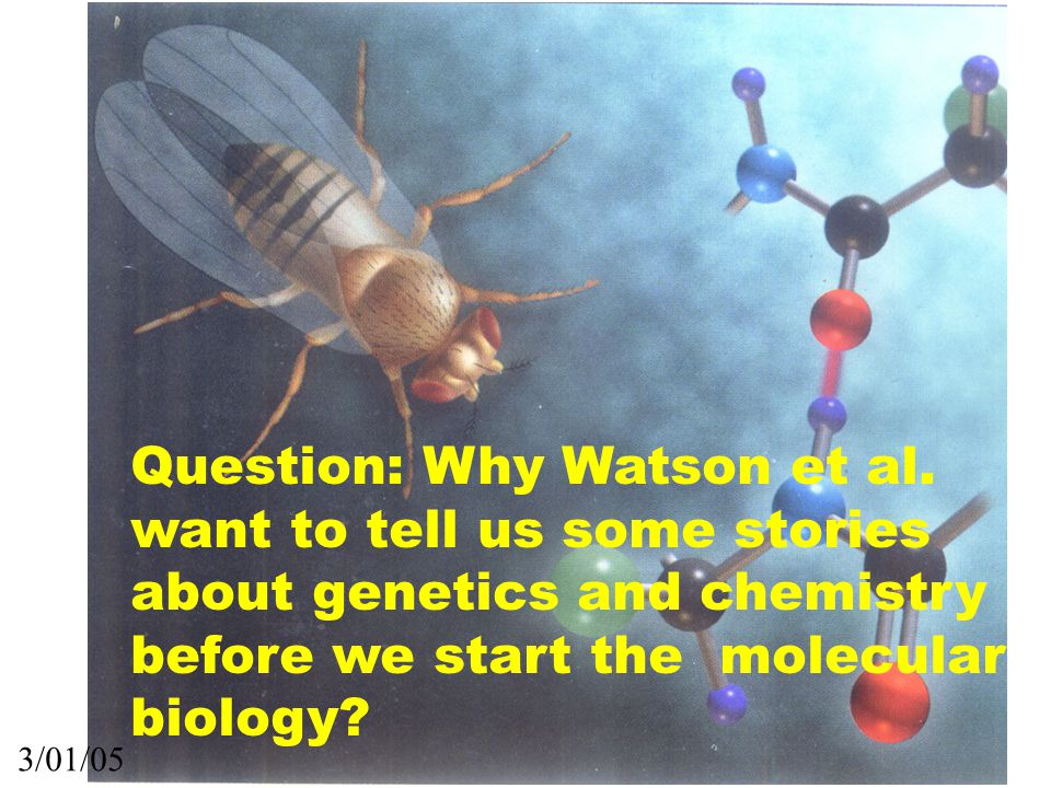 Question: Why Watson et al.