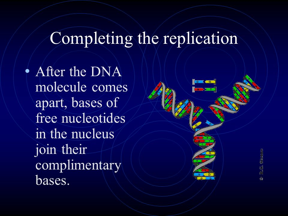 DNA replication. Why needed.