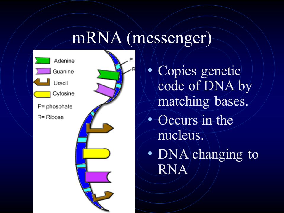 RNA Very similar to DNA.
