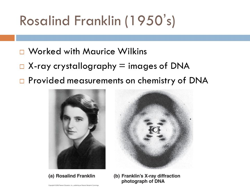 Rosalind Franklin (1950's)  Worked with Maurice Wilkins  X-ray crystallography = images of DNA  Provided measurements on chemistry of DNA