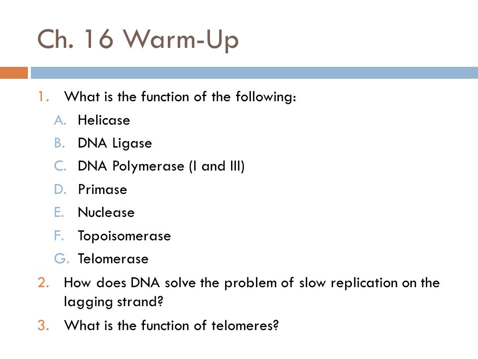 Ch. 16 Warm-Up 1.What is the function of the following: A.Helicase B.DNA Ligase C.DNA Polymerase (I and III) D.Primase E.Nuclease F.Topoisomerase G.Te
