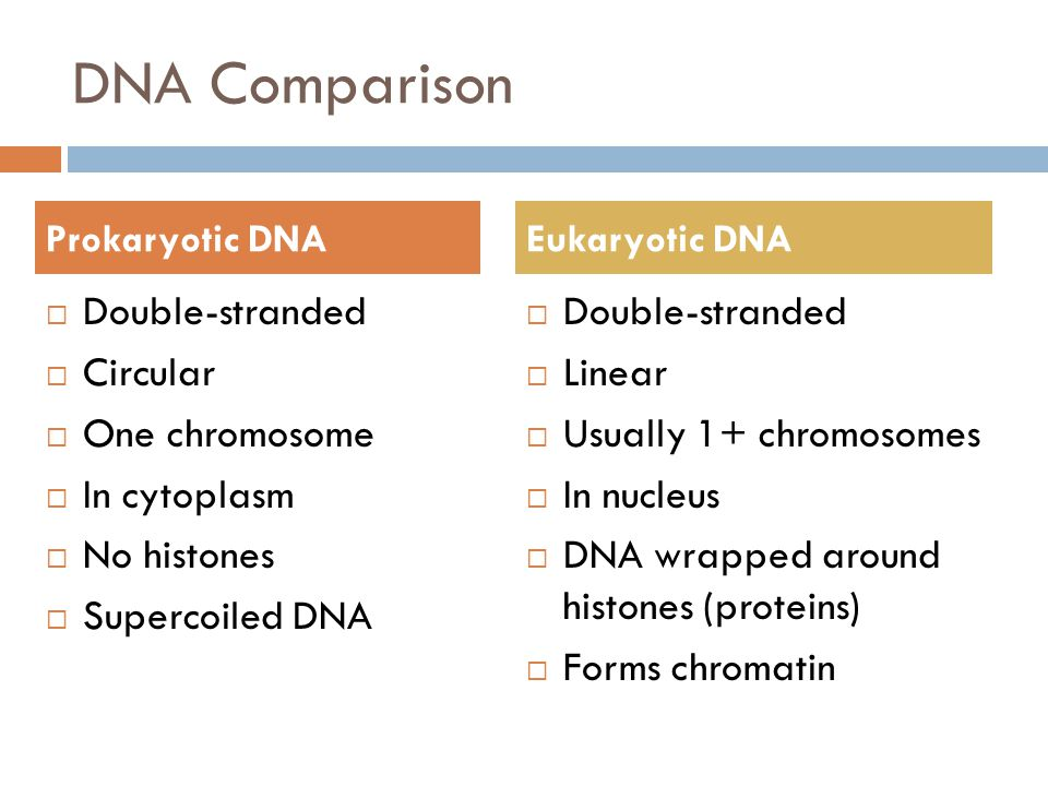 DNA Comparison  Double-stranded  Circular  One chromosome  In cytoplasm  No histones  Supercoiled DNA  Double-stranded  Linear  Usually 1+ chromosomes  In nucleus  DNA wrapped around histones (proteins)  Forms chromatin Prokaryotic DNAEukaryotic DNA