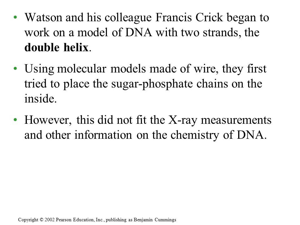 Watson and his colleague Francis Crick began to work on a model of DNA with two strands, the double helix. Using molecular models made of wire, they f