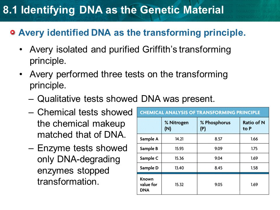 8.1 Identifying DNA as the Genetic Material Avery identified DNA as the transforming principle.
