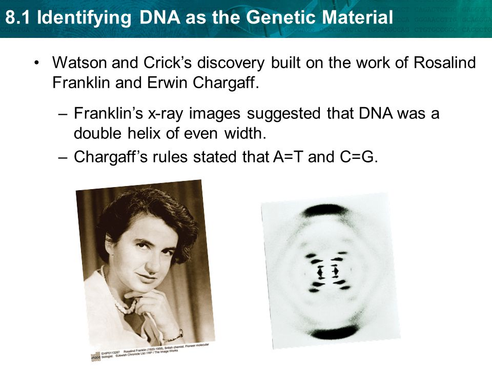 8.1 Identifying DNA as the Genetic Material Watson and Crick's discovery built on the work of Rosalind Franklin and Erwin Chargaff.