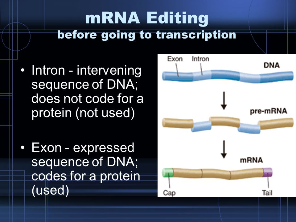 mRNA Editing before going to transcription Intron - intervening sequence of DNA; does not code for a protein (not used) Exon - expressed sequence of DNA; codes for a protein (used)