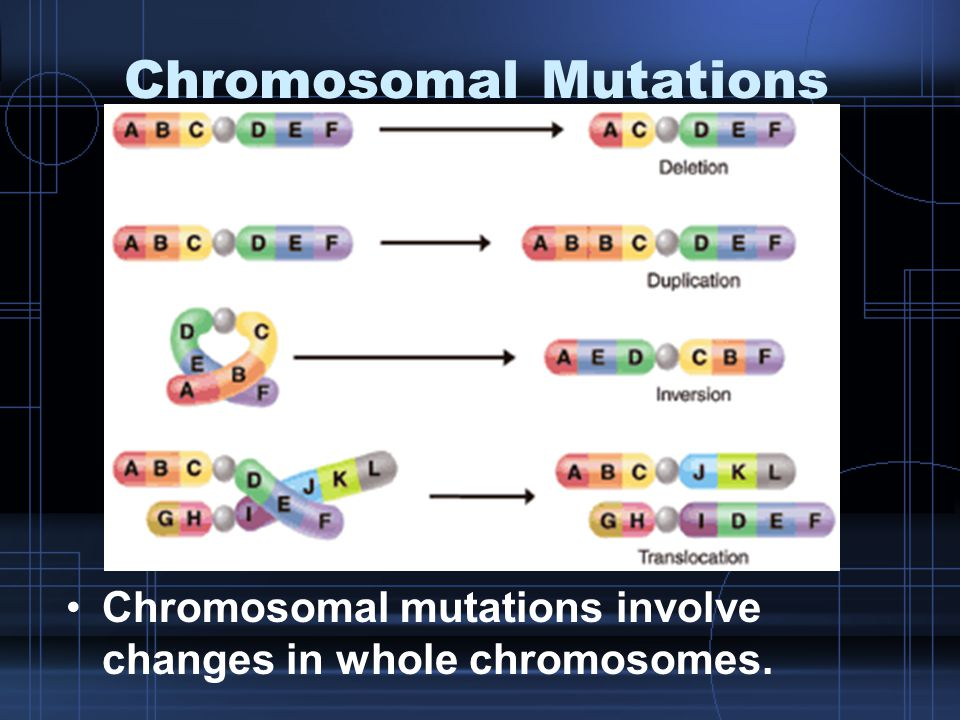 Chromosomal Mutations Chromosomal mutations involve changes in whole chromosomes.