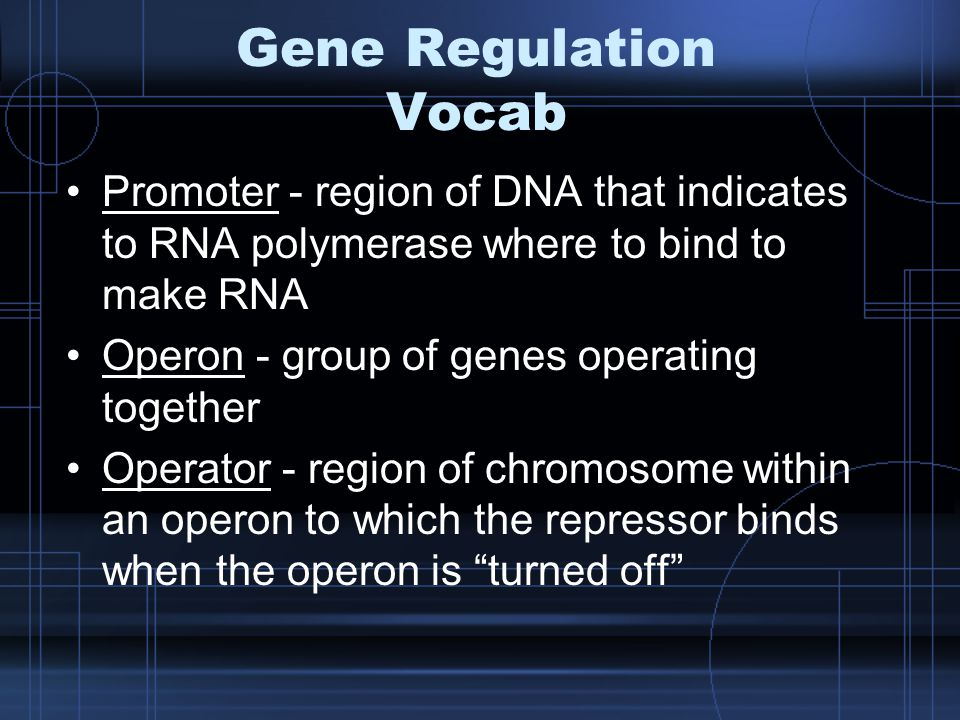 Gene Regulation Vocab Promoter - region of DNA that indicates to RNA polymerase where to bind to make RNA Operon - group of genes operating together Operator - region of chromosome within an operon to which the repressor binds when the operon is turned off