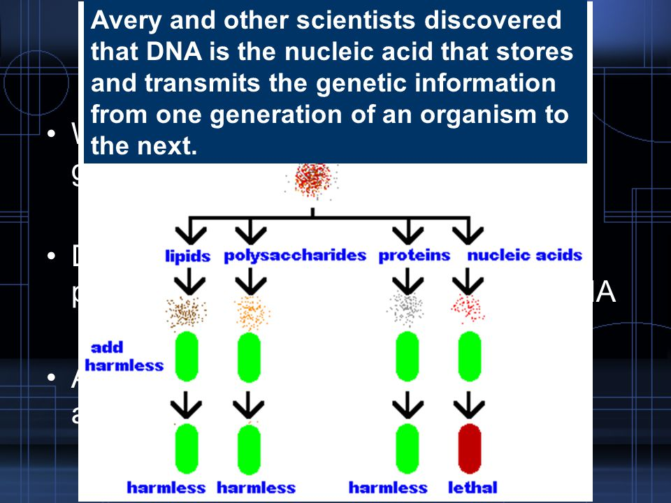 Oswald Avery 1944 World knows a molecule carries the genetic information.