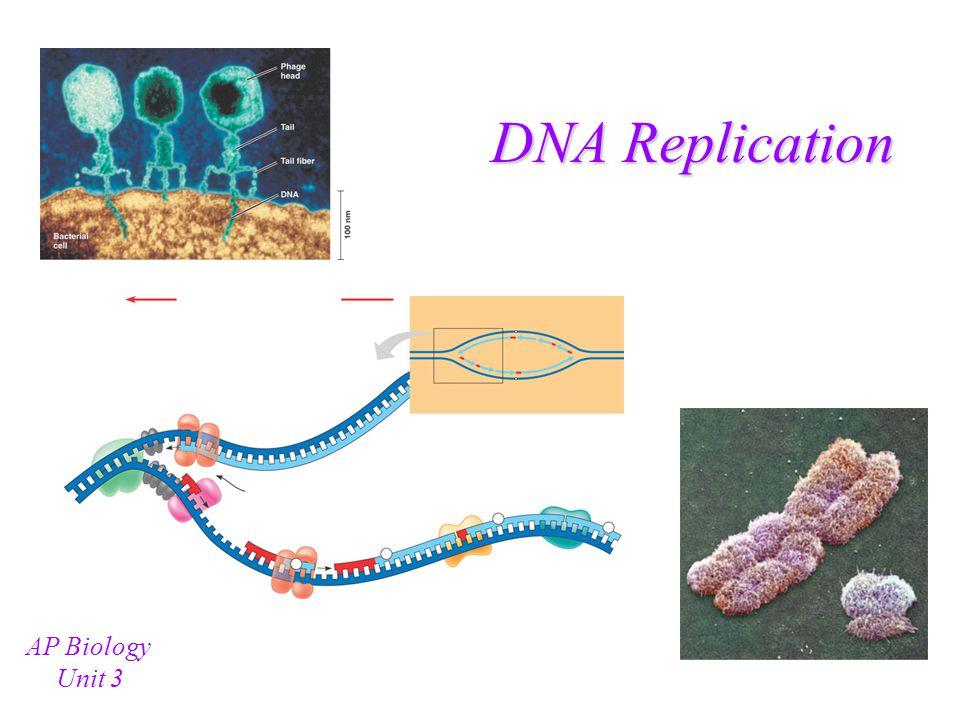 DNA Replication AP Biology Unit 3