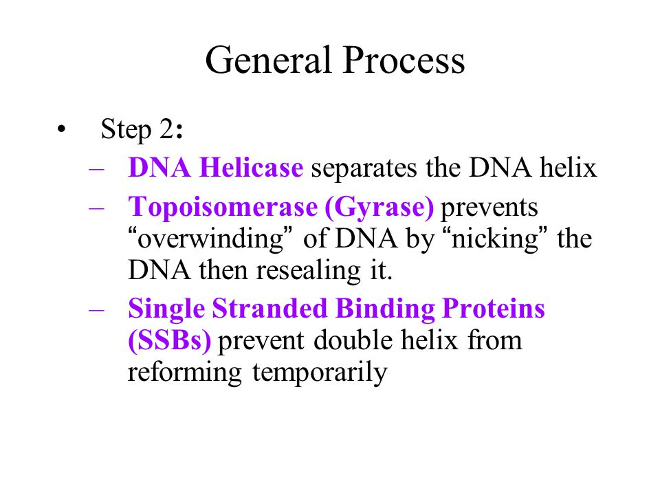 General Process of DNA Replication Step 1: Initiator Proteins bind to origins of replication to begin replication –Attracts other enzymes involved in replication process