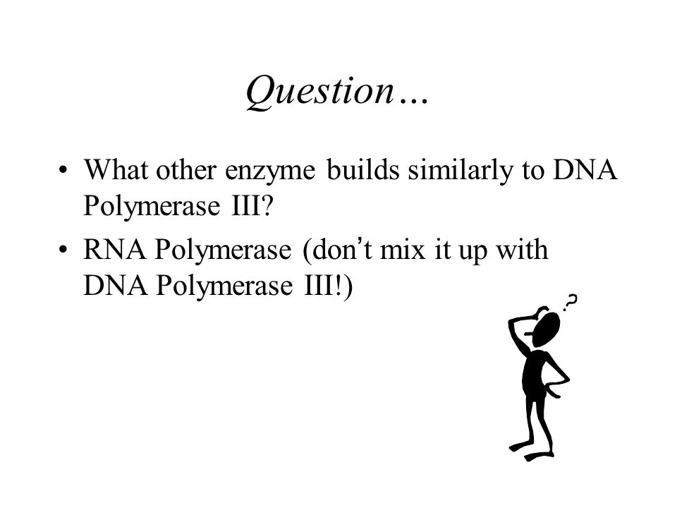 General Process Step 4: DNA Polymerase III builds the new strand of DNA in a 5' to 3' direction –What kinds bonds are being formed to make a new strand of DNA.