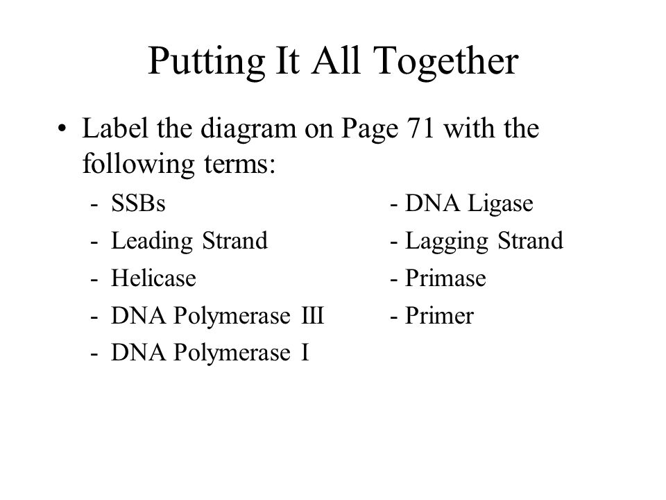 Finishing DNA Replication Problem #2: Okazaki fragments and bases replaced by DNA Polymerase I are not attached to rest of DNA Solution = DNA Ligase seals everything together