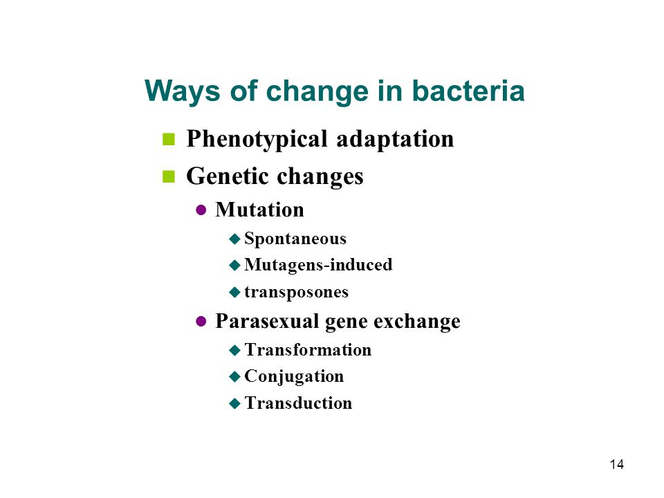 Ways of change in bacteria Phenotypical adaptation Genetic changes Mutation  Spontaneous  Mutagens-induced  transposones Parasexual gene exchange 