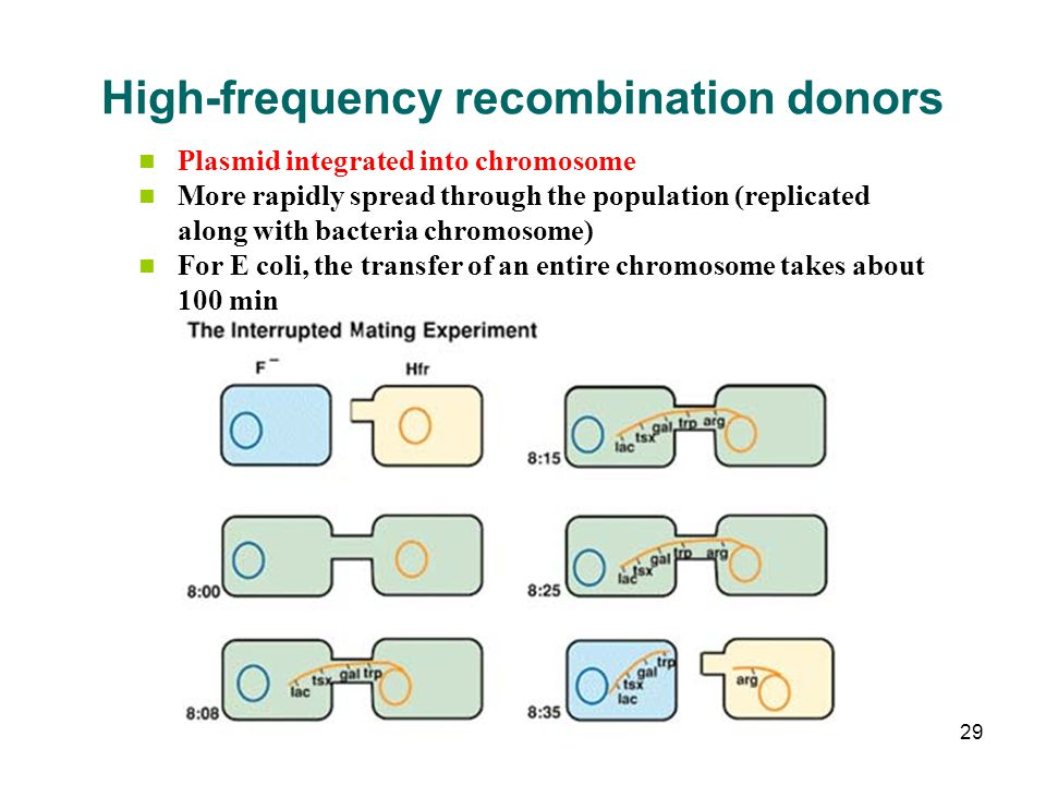 High-frequency recombination donors Plasmid integrated into chromosome More rapidly spread through the population (replicated along with bacteria chro