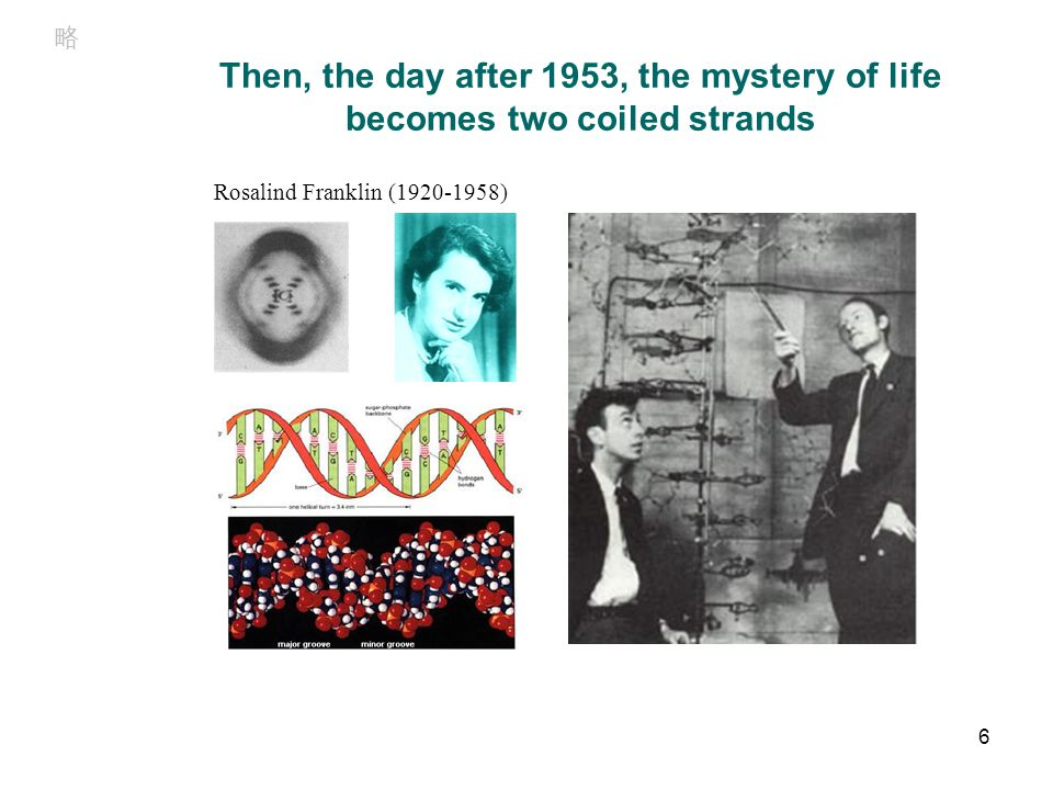 Concept of operon From left to right: Francois Jacob (1920- ), Jacques Monod (1910- 1976) and André Lwoff (1902-1994), awarded the Nobel Prize for Physiology or Medicine in 1965.