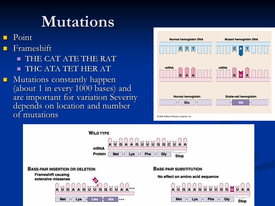 Mutations Point Point Frameshift Frameshift THE CAT ATE THE RAT THE CAT ATE THE RAT THC ATA TET HER AT THC ATA TET HER AT Mutations constantly happen (about 1 in every 1000 bases) and are important for variation Severity depends on location and number of mutations Mutations constantly happen (about 1 in every 1000 bases) and are important for variation Severity depends on location and number of mutations