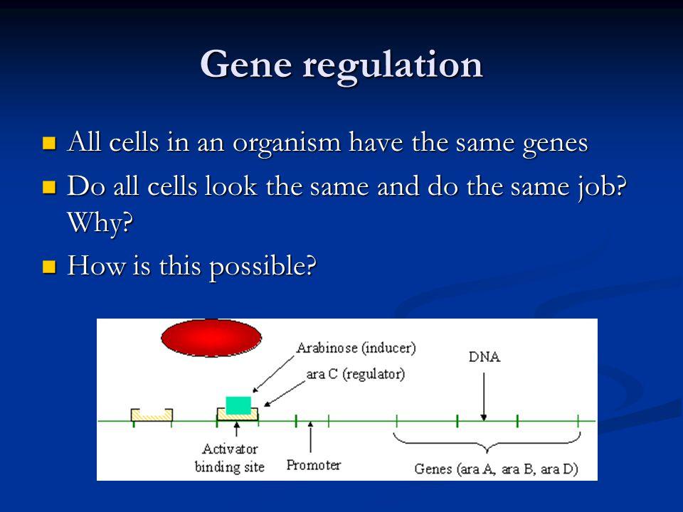 Gene regulation All cells in an organism have the same genes All cells in an organism have the same genes Do all cells look the same and do the same job.