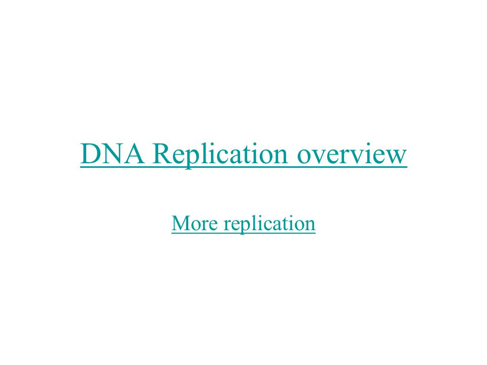 DNA Replication overview More replication
