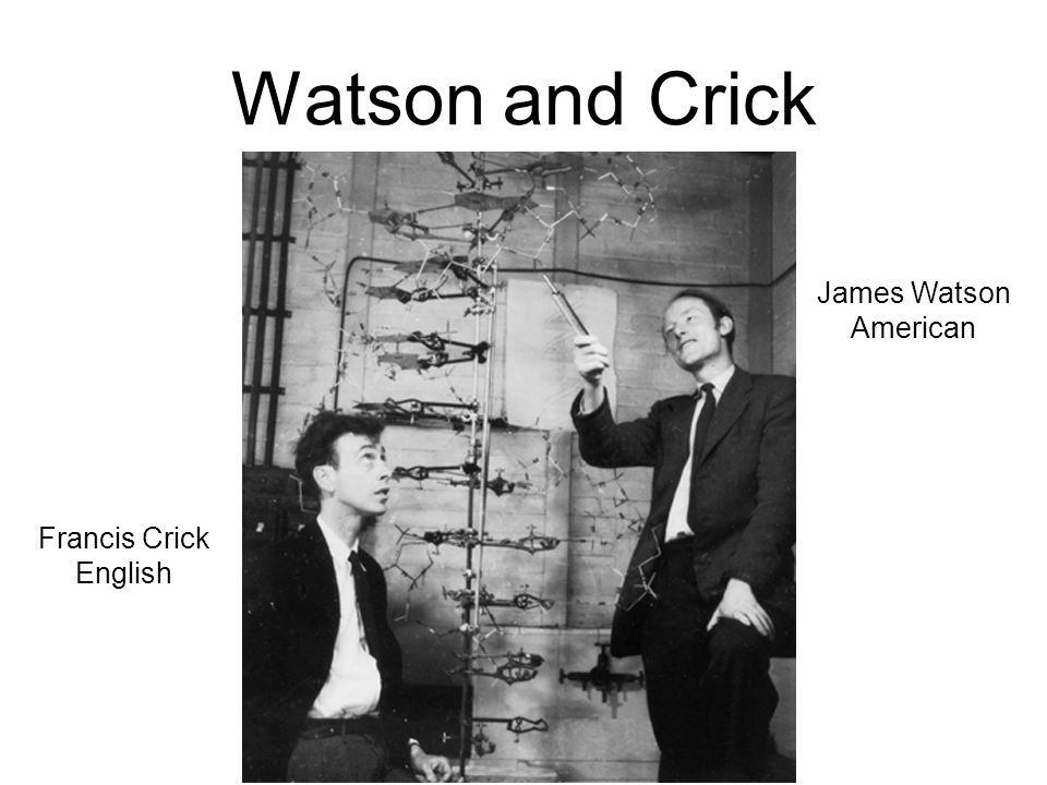 Watson and Crick James Watson American Francis Crick English